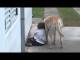 Friends Forever!  Dog Befriends Little Boy With Down Syndrome