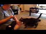 Кот, котик, смешно, до слёз, прикол, хулиган, приложение, ахаха :)