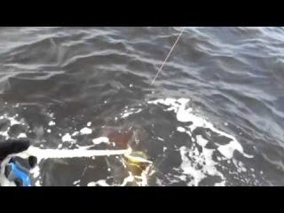 Scary Dangerous Chain SawFish Encounter ____ �������� ����-����
