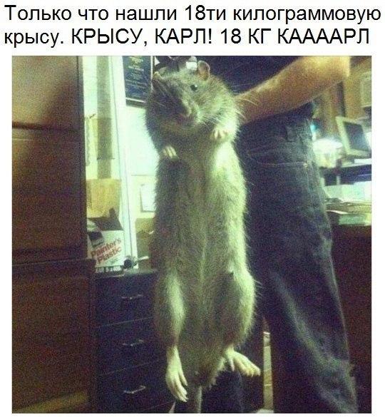 Фото №388791057 со страницы Александра Мальцева