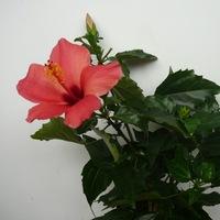 Комнатные цветы в контакте