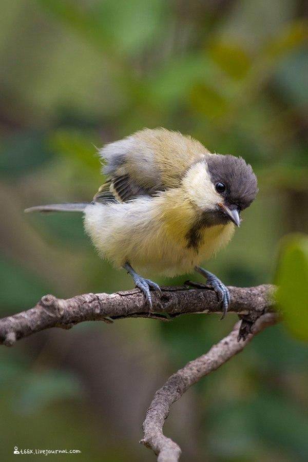 птицы Турции