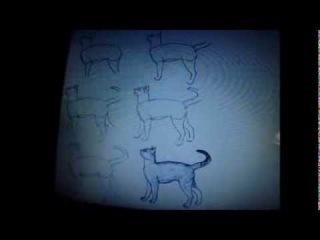 Как ПРАВИЛЬНО рисовать кошку.