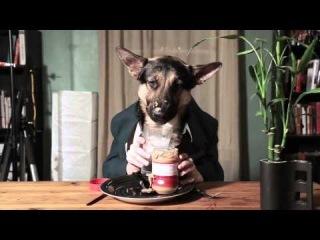 Прикольная Овчарка завтракает.Когда я ем я тяф и нем