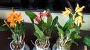 ОРХИДЕИ С СЮРПРИЗАМИ уцененные орхидеи почтой