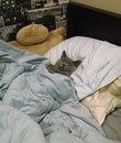 Нужно набраться смелости и всё-таки рассказать коту, что это он живёт у меня…