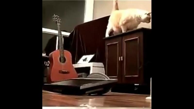 I zvířátka mají svůj den !
