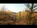 Посади лес! Короткометражный видеоролик