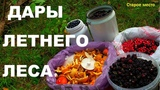 Грибы и ягоды.Дары летнего леса.Гадюка и лесная ежевика