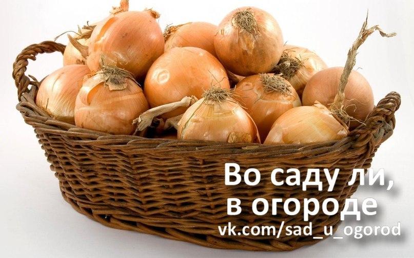 http://cs14101.vk.me/c7001/v7001261/aa0c/cAyruwZq2Eo.jpg