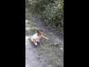 Кира играет в лесу на тропинке