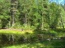 Власти Карелии в следующем году освободят от аренды 20% лесного фонда.  В Карелию могут прийти новые инвесторы, в том...