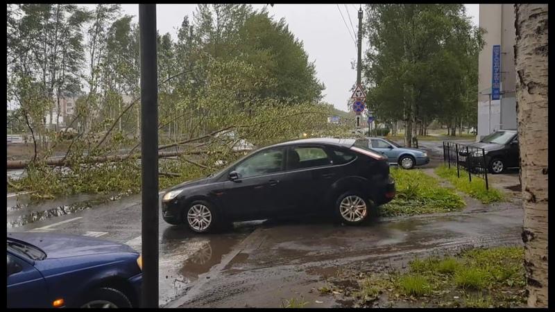 В Северодвинске рухнул очередной Макси-тополь