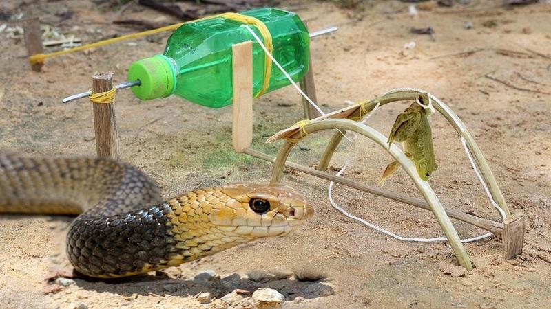 Easy Snake Trap - Fantastic Snake Trap Technology make from plastic bottle