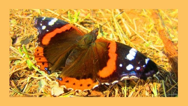 Бабочки в сентябре Этот прекрасный мир🦋🌺🍂