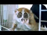 Лори - самые милые животные в мире ^^