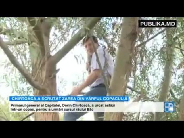 Dorin Chirtoacă a urcat într-un copac