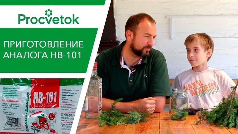 НВ-101 - органический стимулятор роста. Как приготовить аналог HB-101 своими руками.