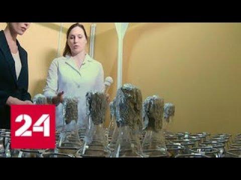 Программа Наука: инновационное биотопливо и синтетическая нефть - Россия 24