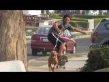 Собака тянет скейтборд на высокой скорости! HD
