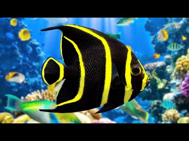 Coral Reef Aquarium The Best Relax Music 2 Hours Sleep Music HD 1080P