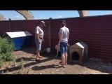 Нам необходима помощь в строительстве вольеров для собак.