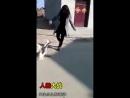 Бои против животных!
