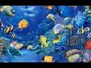 Египет: Красное море: Ручные рыбы: Кормление
