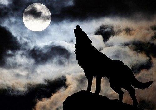 Деревня волков или ужас во плоти