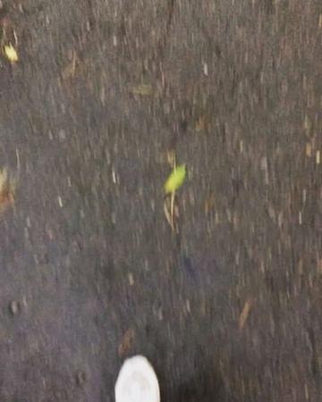 Ira_levytska video