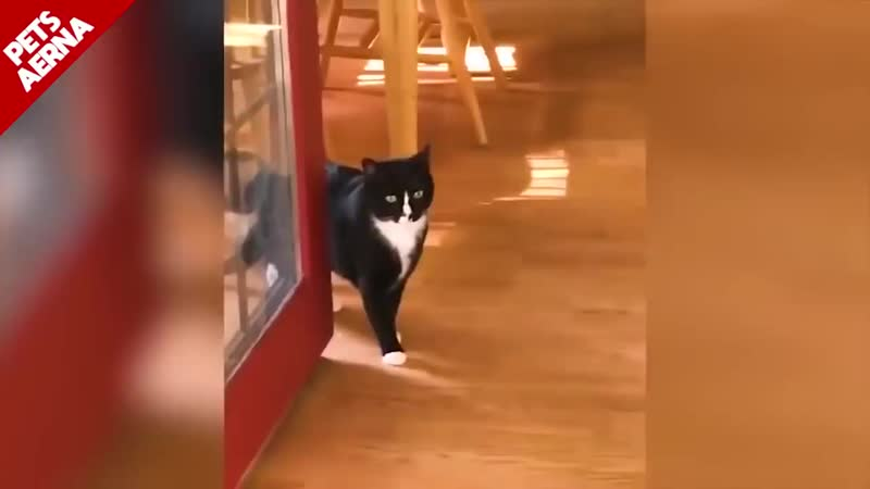 EPIC LAUGH Funniest Scared Cat Home 2018 Compilation Funny cat Videos.mp4