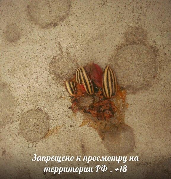 Боевики обстреляли из минометов наши позиции возле Новозвановки, Зайцево, Новоалександровки и шахты Бутовки, - пресс-центр штаба АТО - Цензор.НЕТ 9654