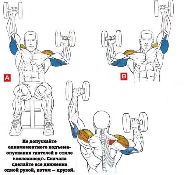 Упражнения на трицепс | Как накачать трицепс
