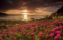 Доброта - это Солнце, которое согревает Душу Человека…Всё хорошее в природе от Солнца…