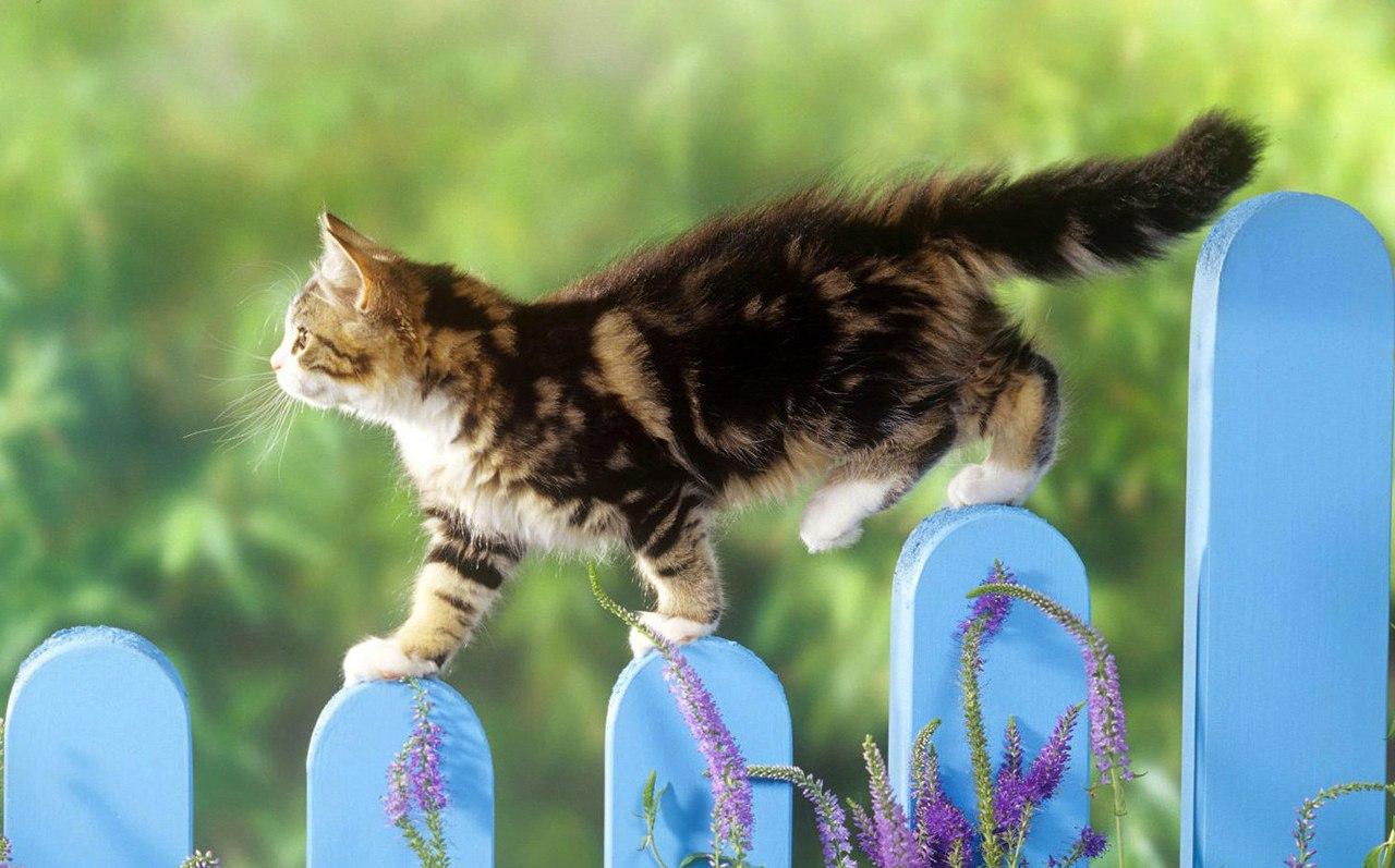 Почему кошки такие живучие?