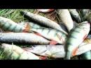 №2 Видеоотчет с рыбалки от магазина Рыболов Комфорт