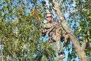 Услуги по обрезке деревьев в картинах.