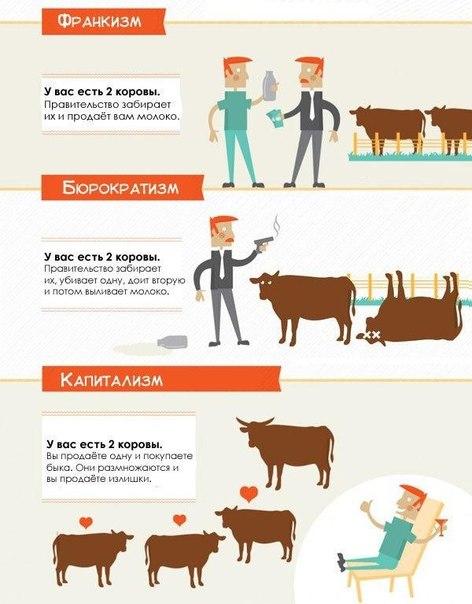 2 коровы, общество и политический строй