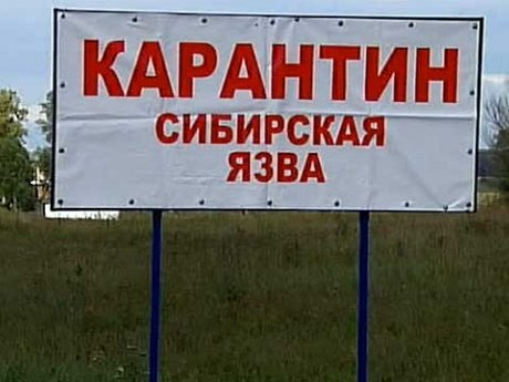 В Ростовской области зарегистрировали вспышку сибирской язвы