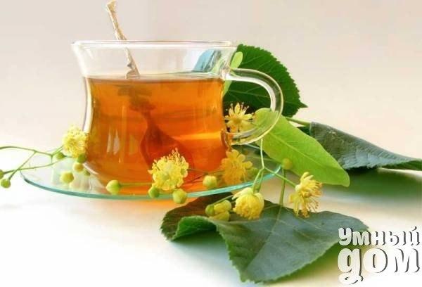 Травы и цветы, которые можно заваривать в чай Простые изменения в питании в лучшую сторону быстро отразятся на вашем здоровье, внешнем виде и бодрости. Начать перемены проще всего с напитков. Заменить сладкие газированные домашним лимонадом, а чай и кофе (оставив лишь утреннюю чашку, для нуждающихся в кофеиновом пробуждении) — травами. Цветки, листья и стебли растений — самая здоровая альтернатива чаям. К тому же — намного более разнообразная. Липа Липу принято считать аптечным лекарством. И…