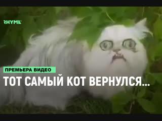 Тот самый кот вернулся... [Рифмы и Панчи]