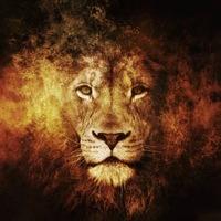 фото львиное сердце