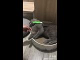Как подстричь коту когти