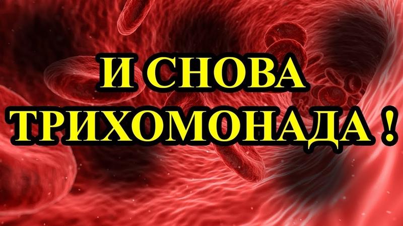 Тромбофлебит — плотины в кровеносных сосудах.