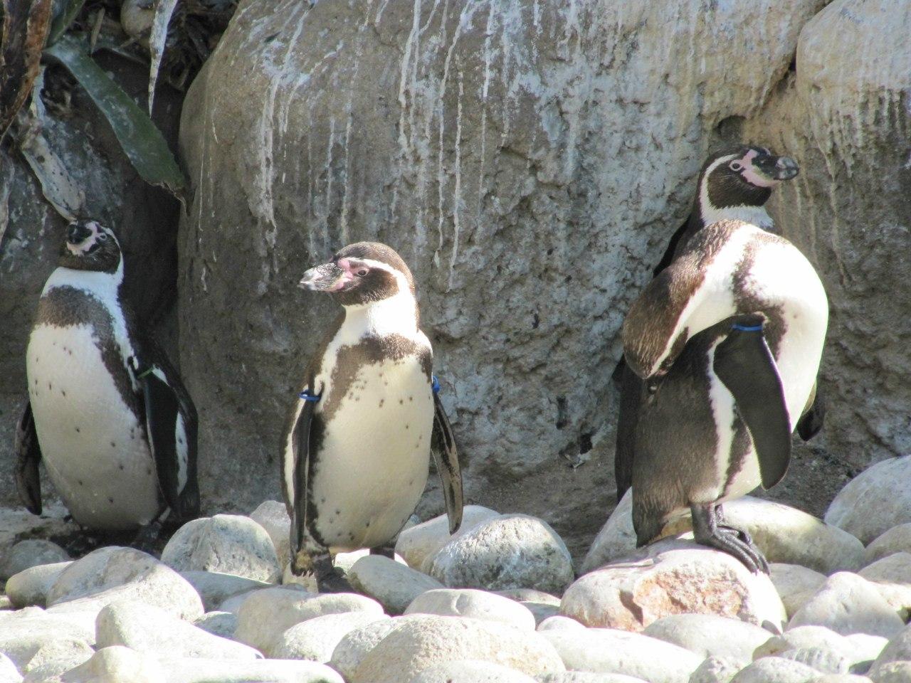 Выиграй билеты на «Пингвинов Мадагаскара» 3
