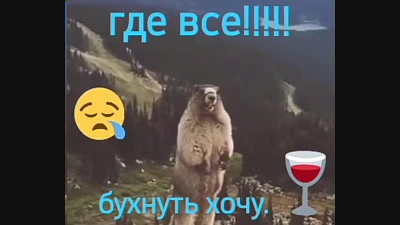 Storage/emulated/0/Android/data/ru.yandex.disk/files/disk/VID-20190103-WA0000.mp4