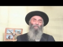46.2 Тора. Жизнь Авраама Текст на сайте