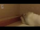Видео подборка с хомячками