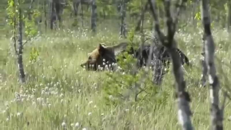 Нейромонах Феофан Пляски с медведем