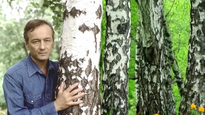Михаил Ножкин. Я в весеннем лесу пил берёзовый сок 2.
